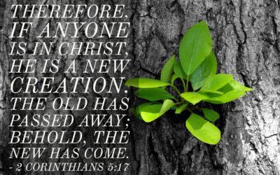 New Creation 2